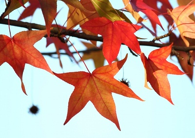 Autumn Fundraisers That Will Be Instant Winners